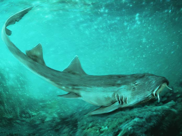 New shark species with spaceship-shaped teeth discovered
