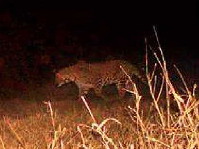 Leopard sighted on campus of research institute in Hyderabad