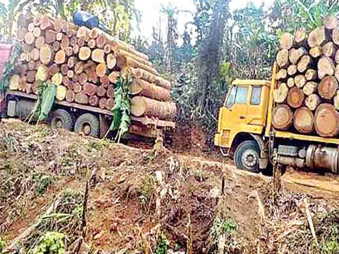 New forest bill soon to tame timber smugglers