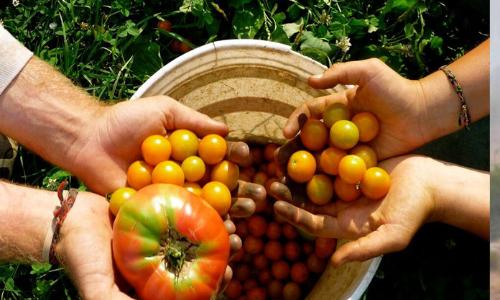 Stumbling blocks for organic farming