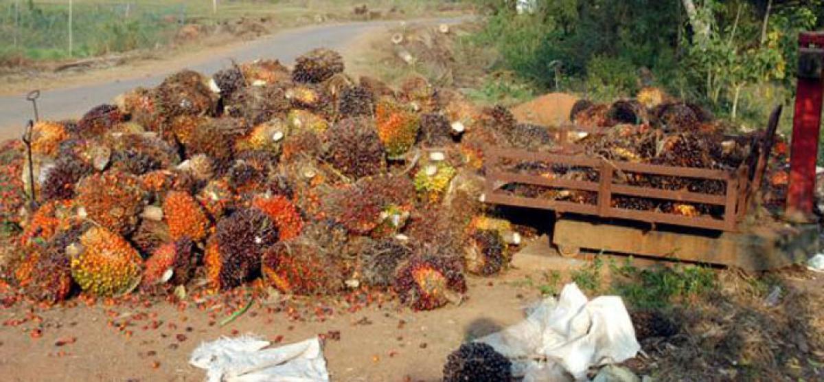 Oil palm developers hail 100% FDI in palm plantation