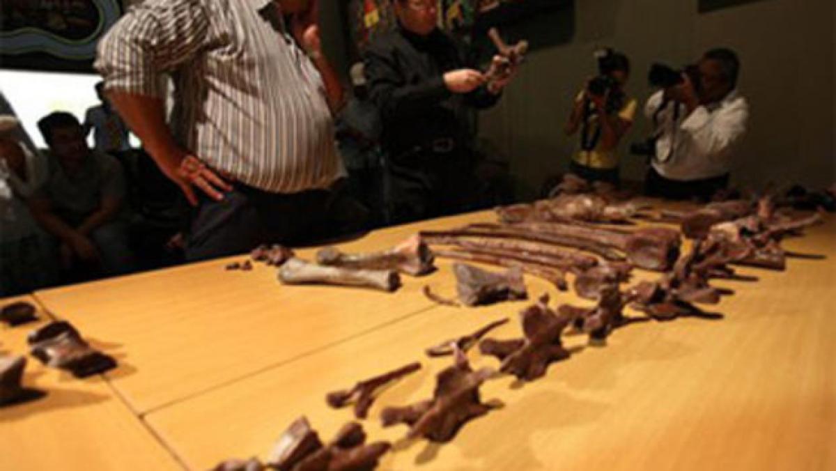 New dinosaur species found in South Africa