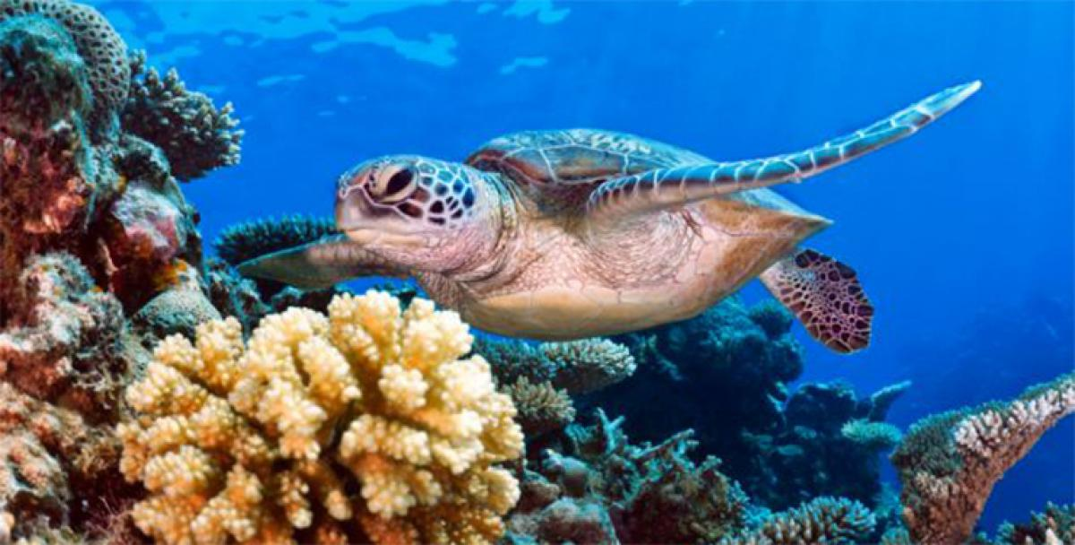 Coral reefs likely to disappear by mid century