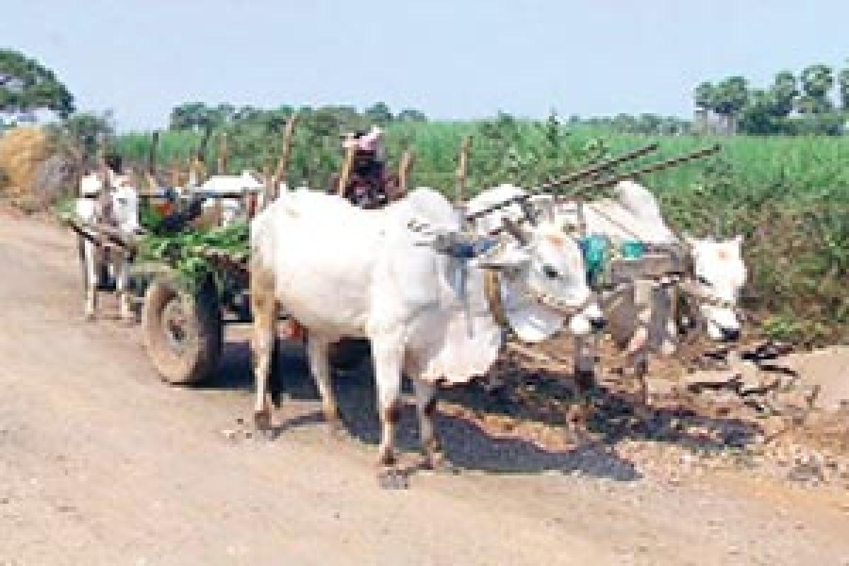 Where farmers still rely on bullock-carts