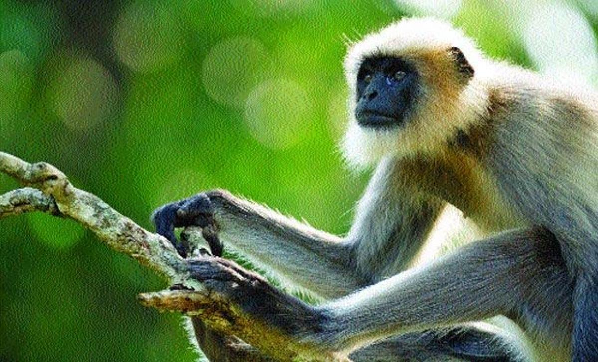 New monkey species discovered in Peru