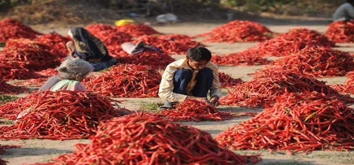 Eating red chilli help you live longer
