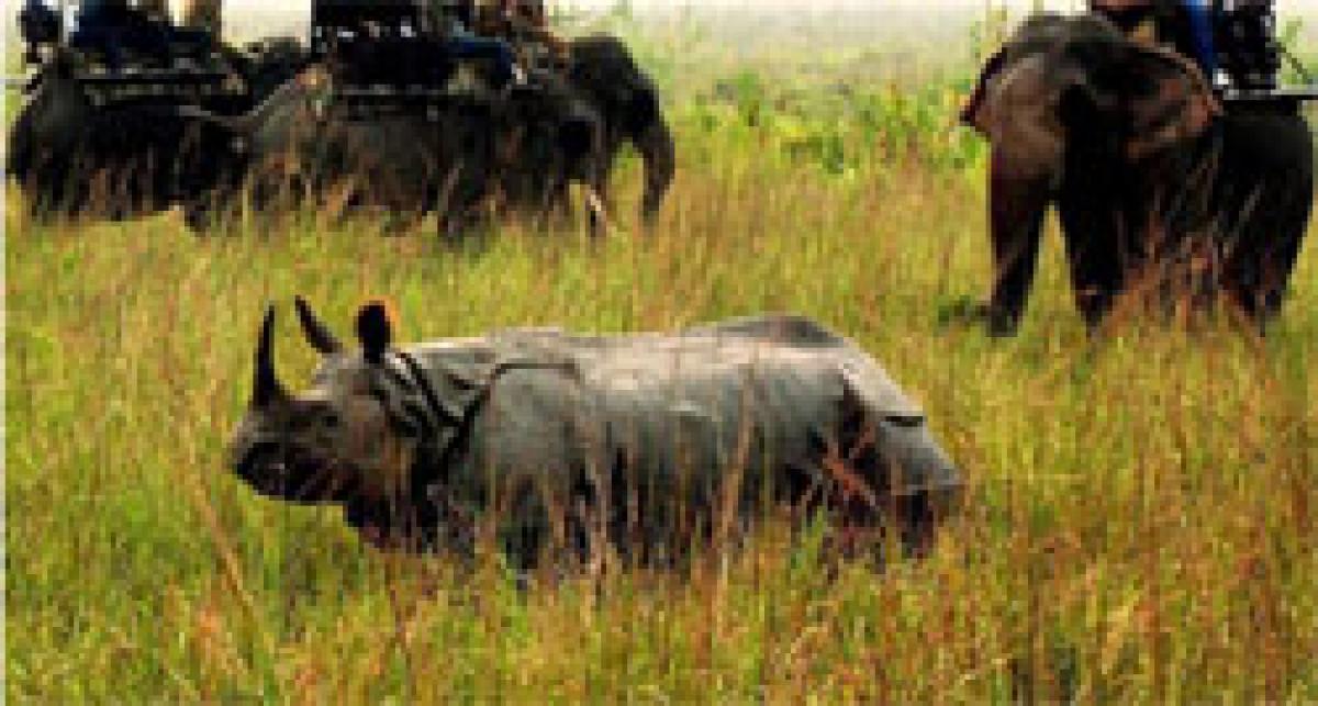 Another Kaziranga rhino falls prey to poachers