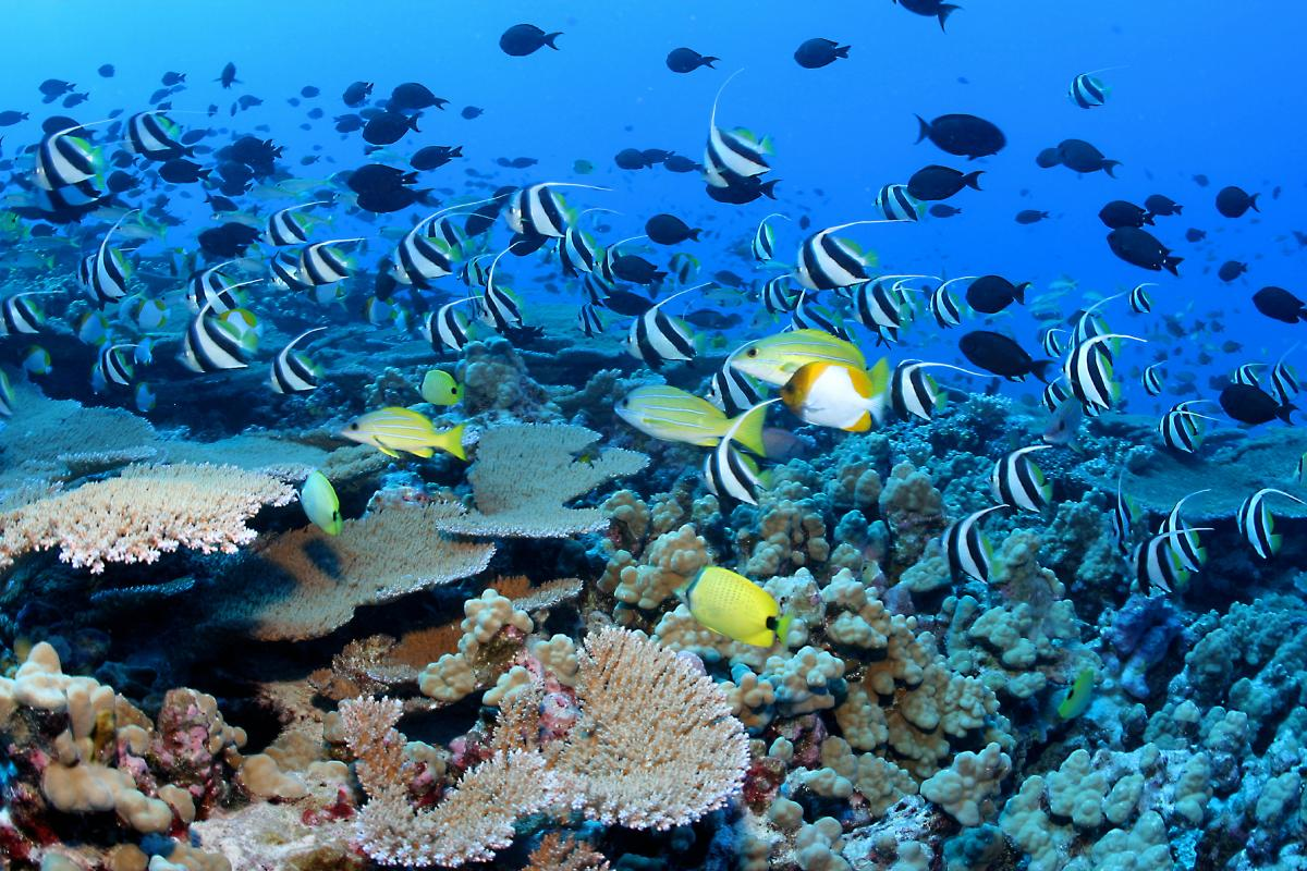 Oceans need big reduction in greenhouse gases