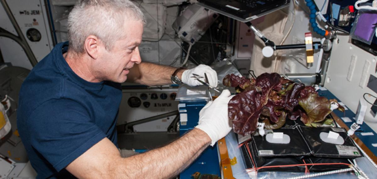 Third lettuce crop planted on space station