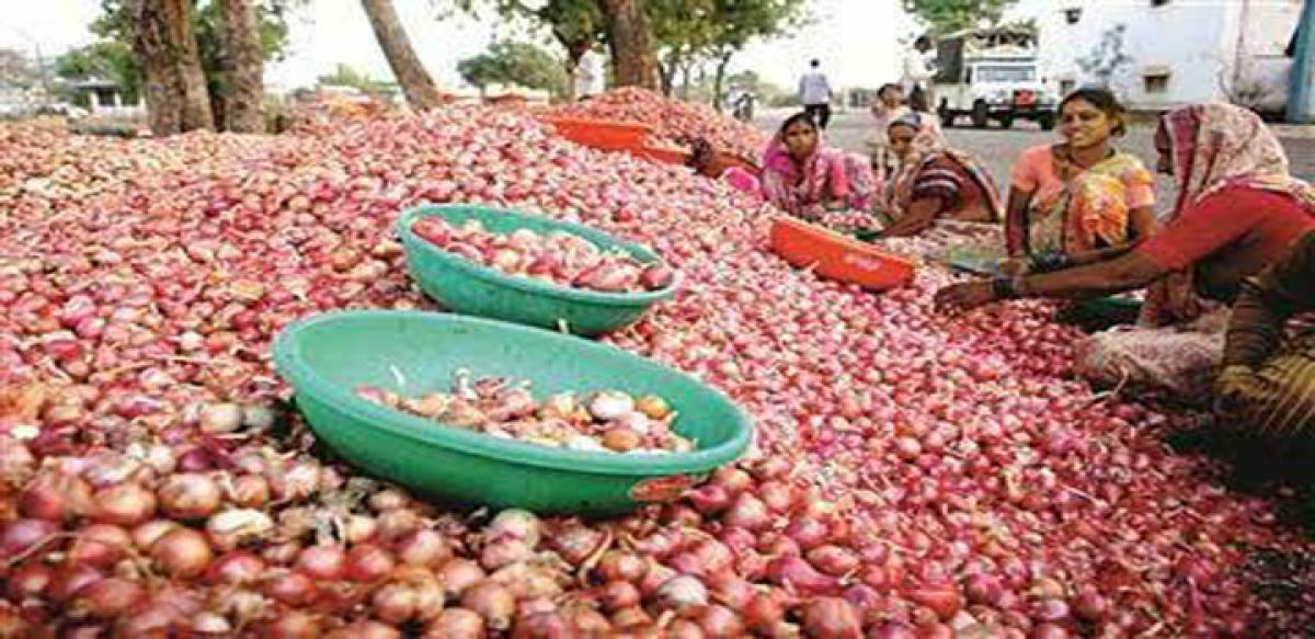 Onion prices fall; farmers in tears