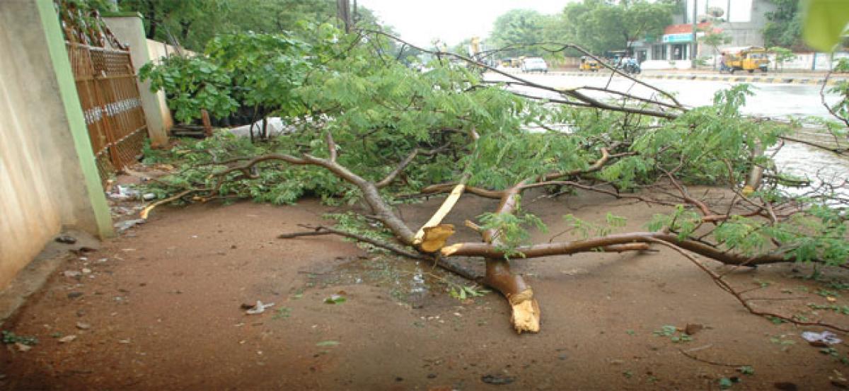 AP Transco fells trees indiscriminately