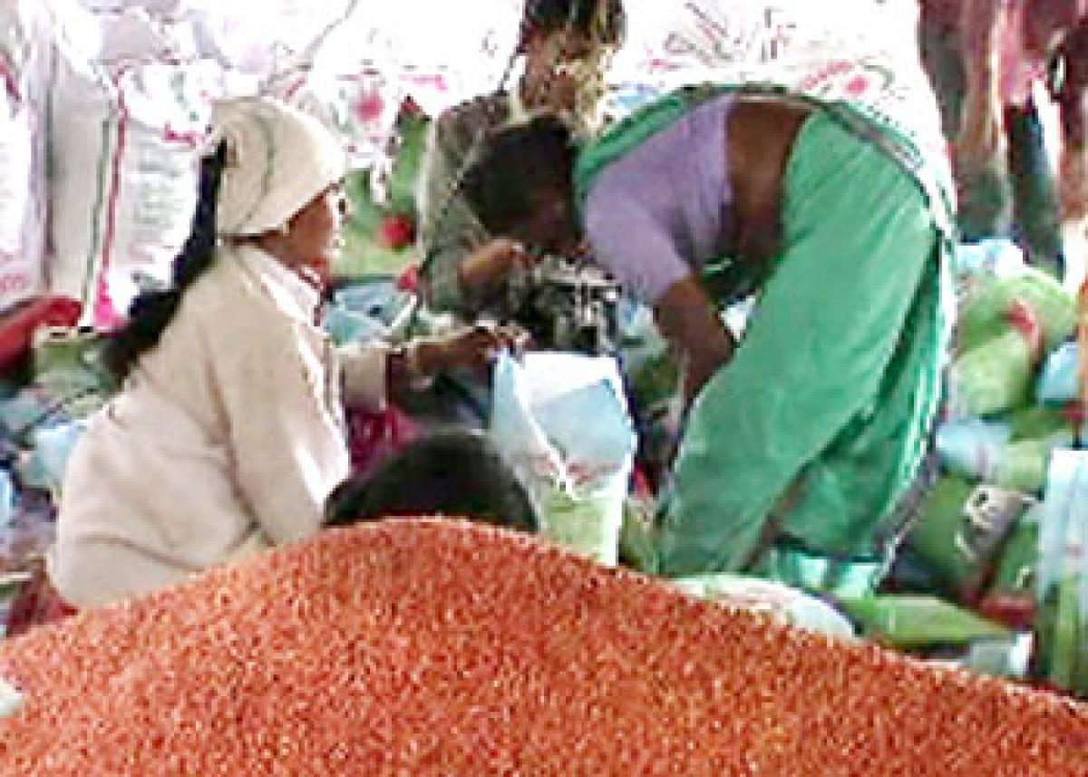 Red jowar crop bring cheers to Armoor farmers