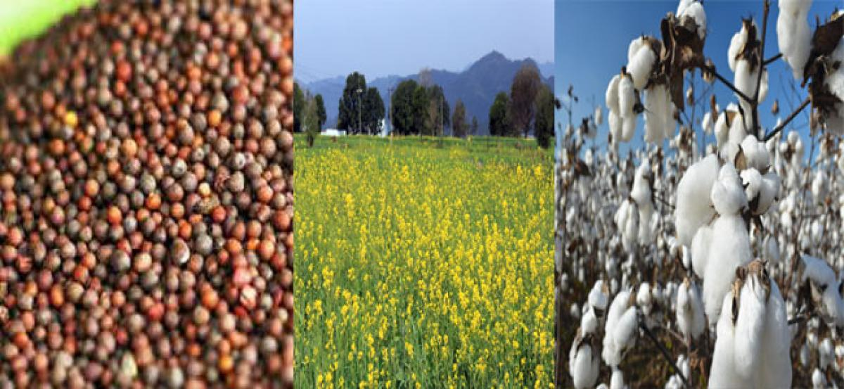 Activists urge PM to reject GM mustard application in toto
