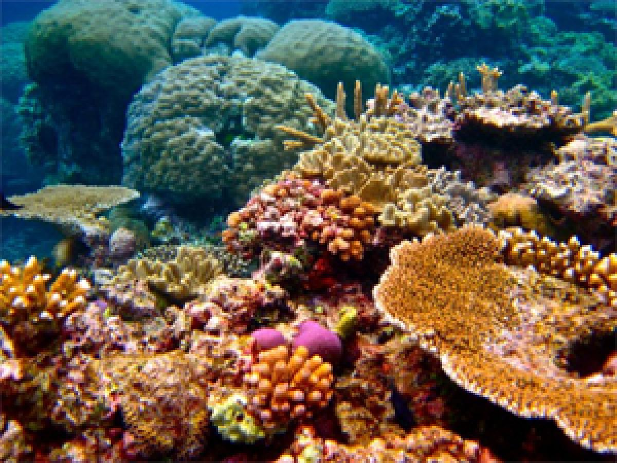 Coral reefs on the verge of disappearance
