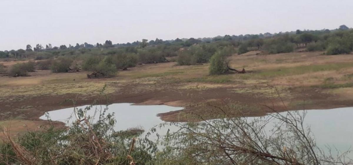 Winged visitors at Merkook cheruvu deprived of habitat