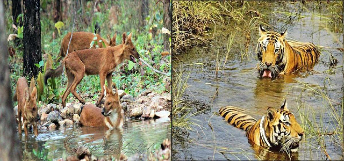 Telangana Govt clips Forestry wings, puts wildlife in peril