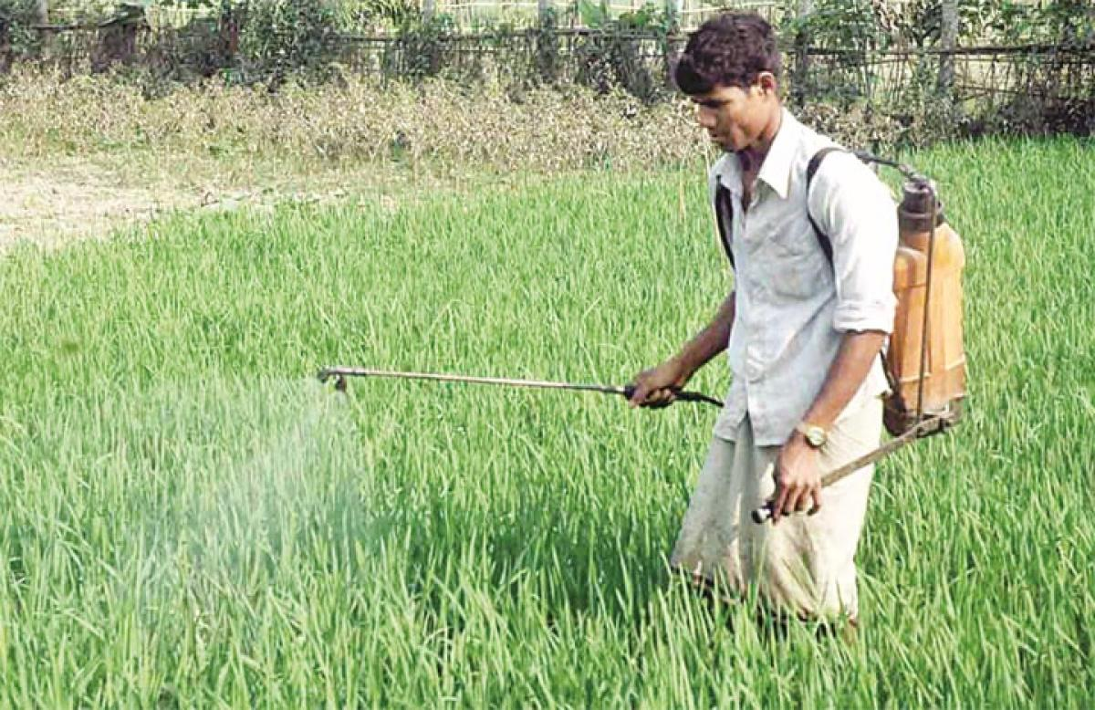 Banking more on agriculture lending