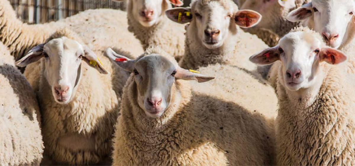 Owners Aadhaar link to livestock