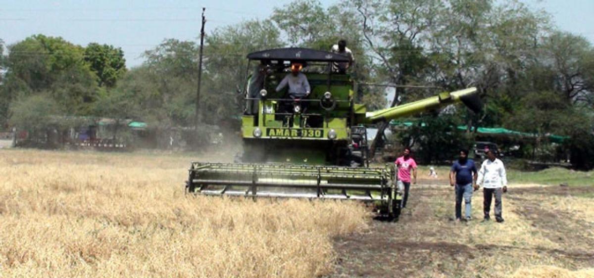 Two new varieties of machine harvestable chickpea released