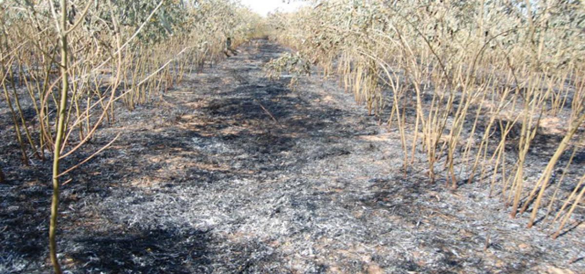 Farmer shell-shocked on seeing burnt crop