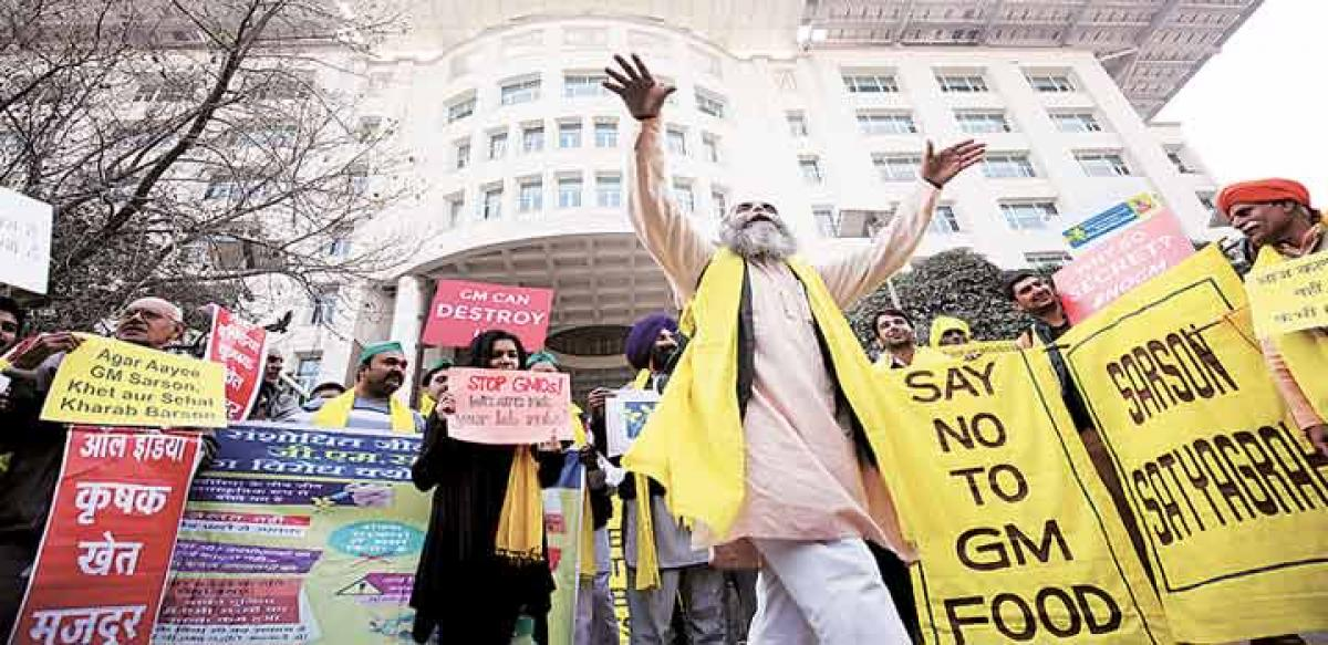 Govt can't deny data on GM Mustard