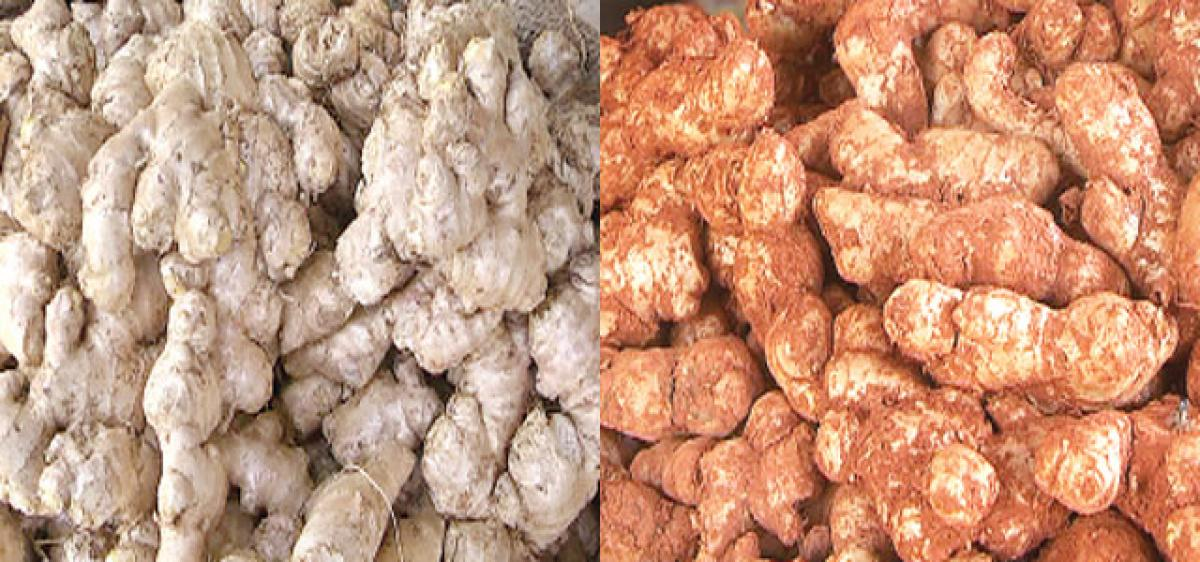 Ginger rates fall suddenly
