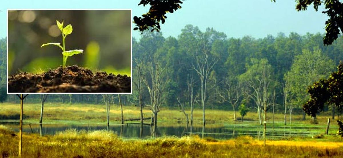 Three lakh trees planted in last 3-years between Kanha-Pench