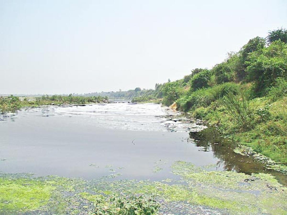 Godavari reeking of pollution
