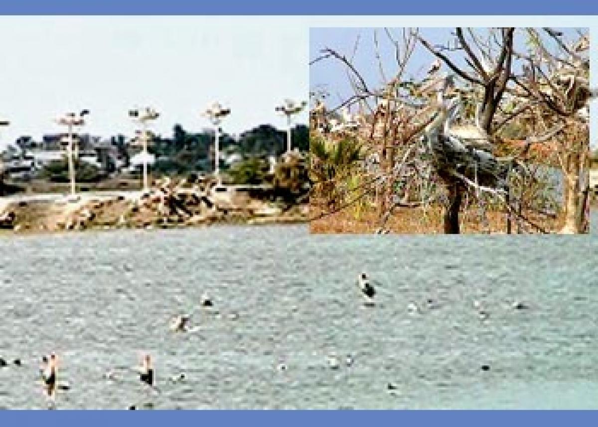 Atapaka pelican paradise in peril