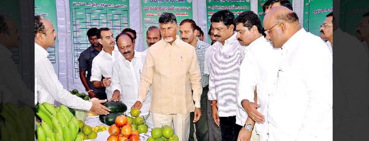 CM pats horticulture farmers