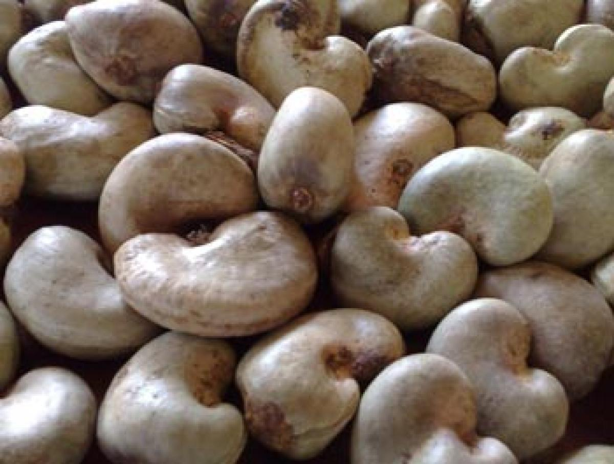 Cashew units cry foul over custom levies