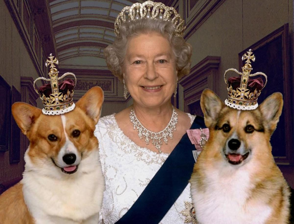 A royal treatment for Queen Elizabeths pet dogs