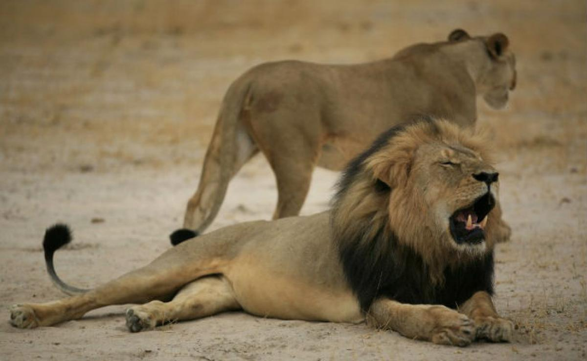 Zimbabwe Lifts Hunting Restrictions Imposed After Cecil Kill