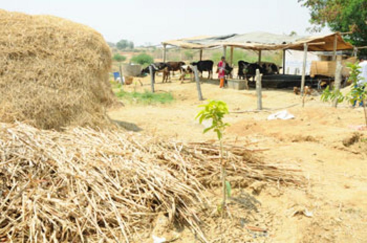Drought and despair loom over Palamuru