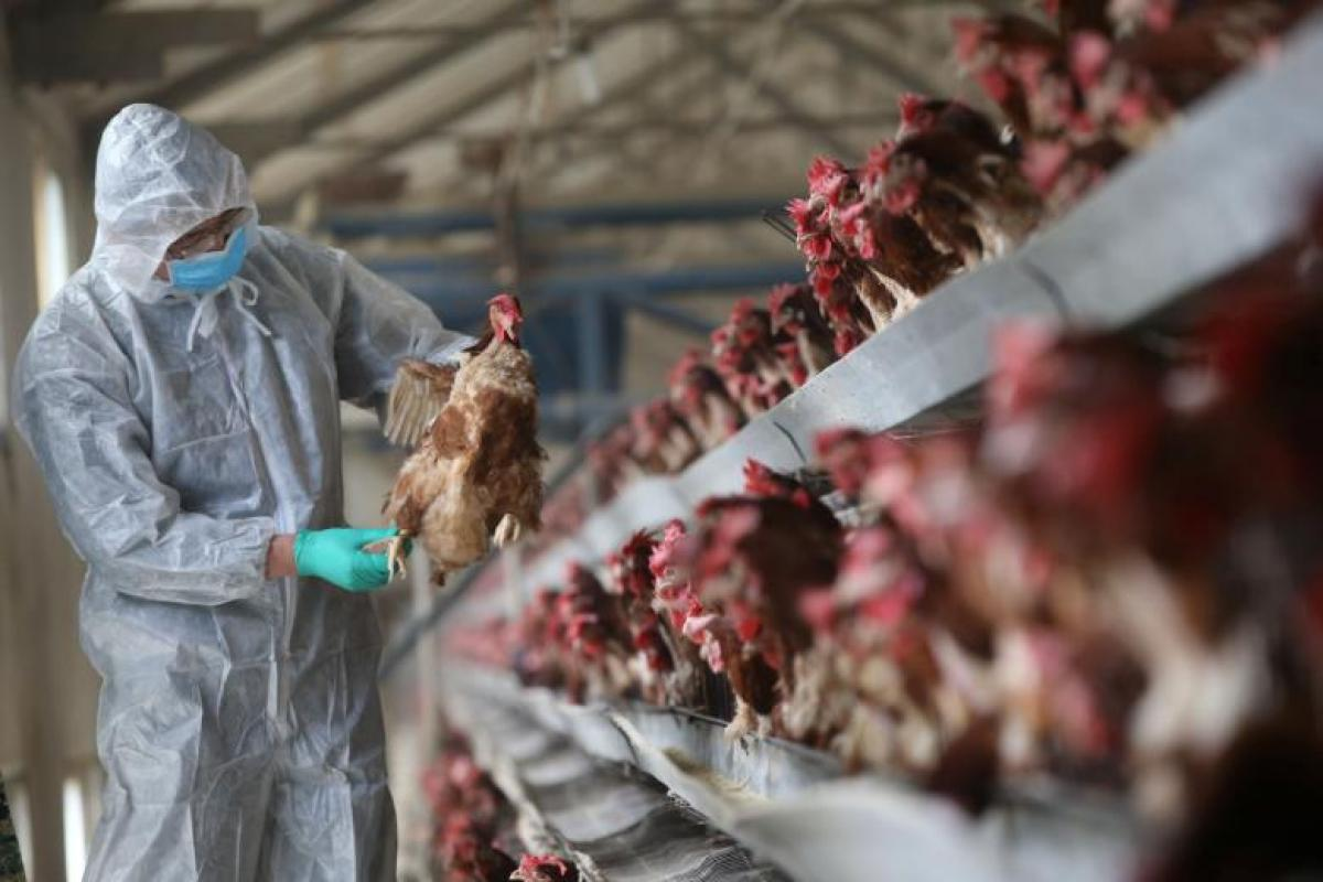 China bird flu death toll rises to 161 in worst outbreak since 2009