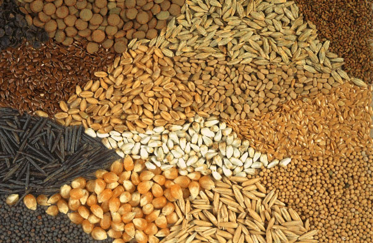 Rising Seed Placement in Vegetable Seeds and New Hybrid Launches to Impel Future Growth of India Seed Industry: Ken Research
