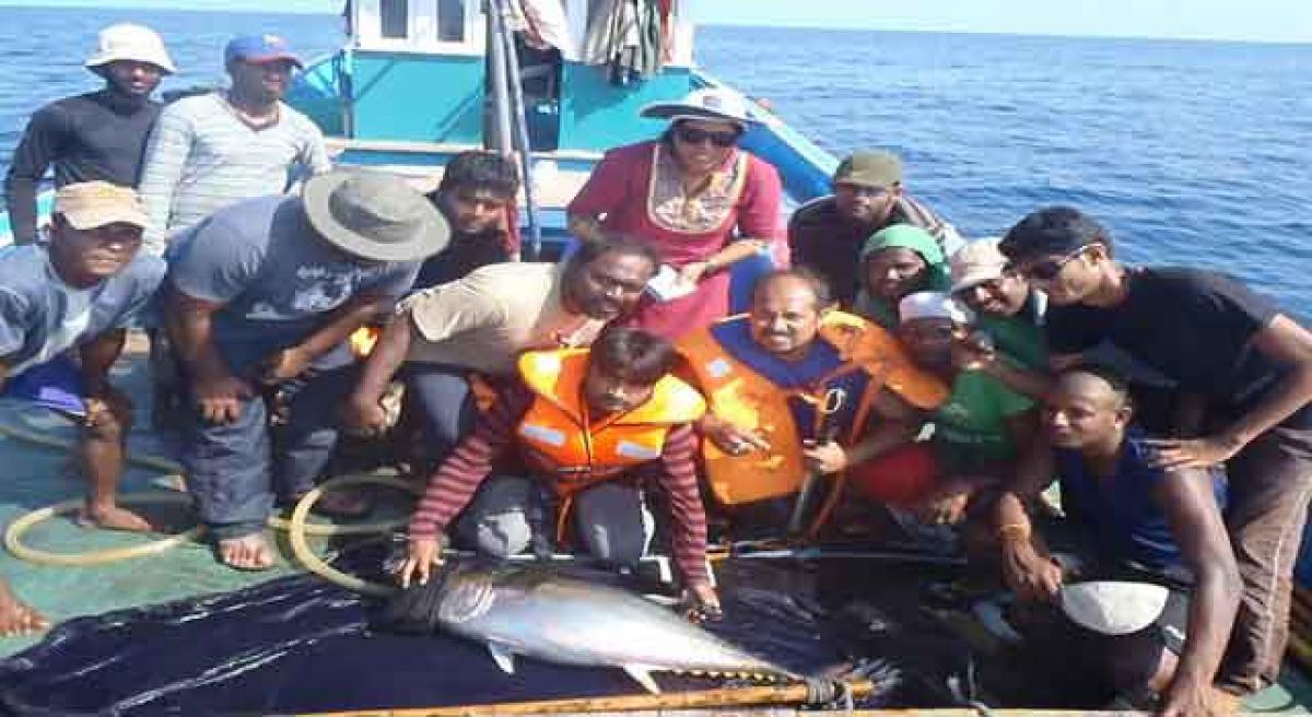 Tuna travel 4k km every year along coast