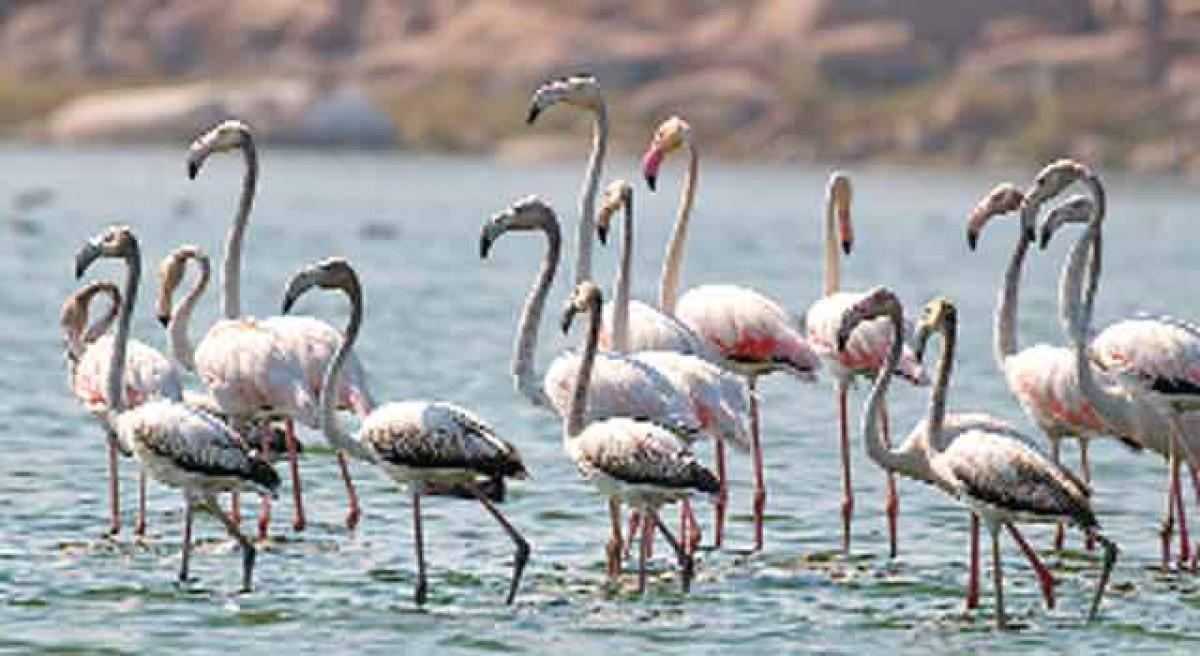 Drought hits winged visitors