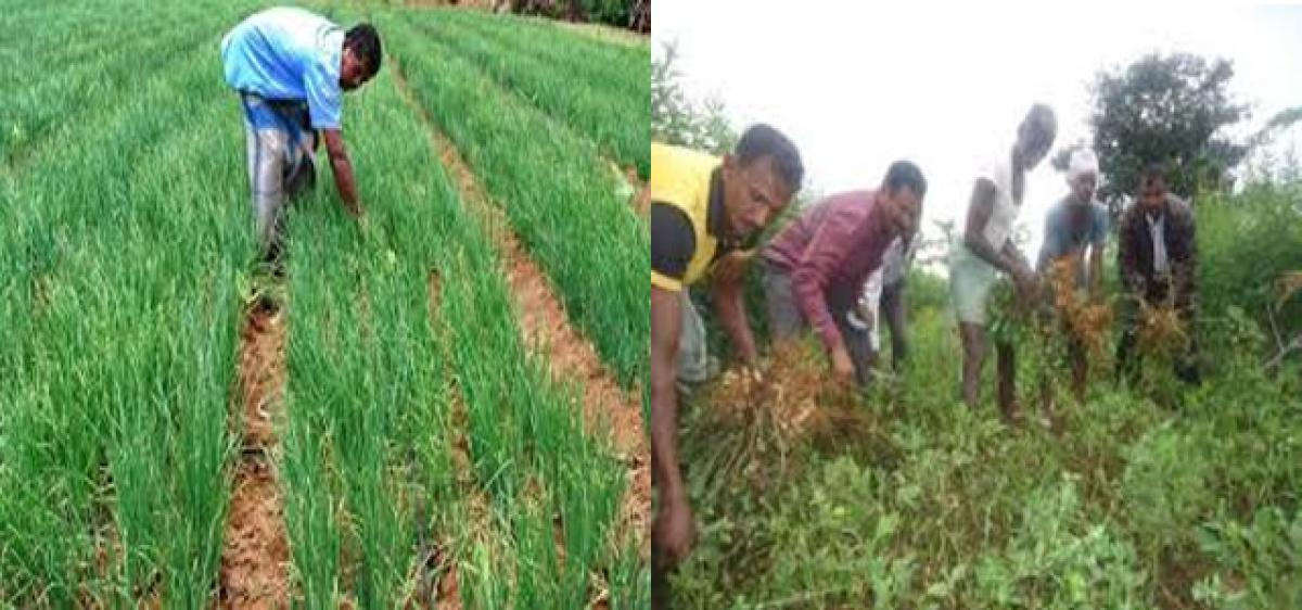 Organic cultivation boosts castor crop yield
