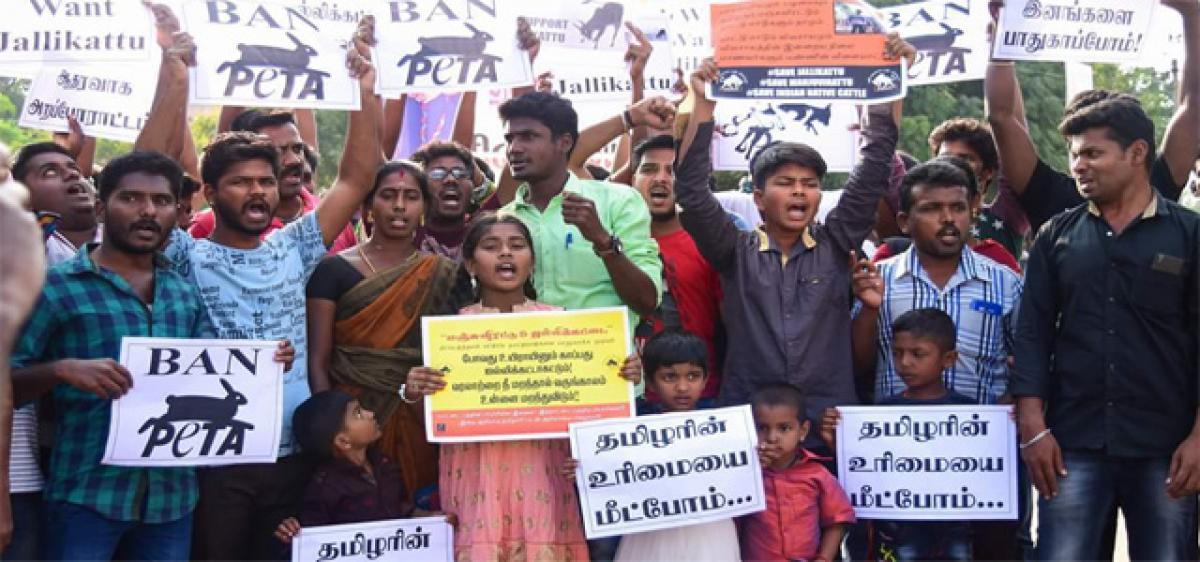 Jallikattu protests spread across Tamil Nadu, CM Panneerselvam to meet Modi