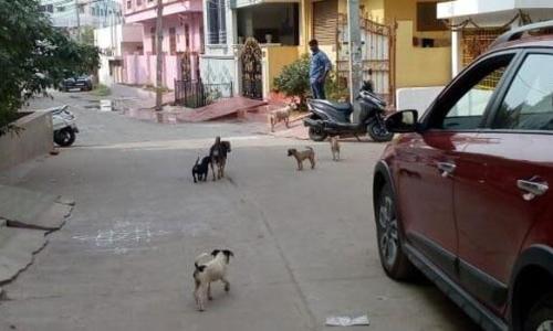 Stray dog menace in Champapet