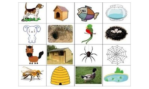 Learn about animal homes