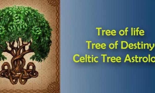 Tree of life - Tree of Destiny- Celtic Tree Astrology