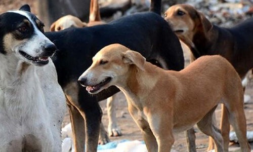 Old City residents on the edge over stray dog menace