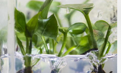 New houseplant can clean your home