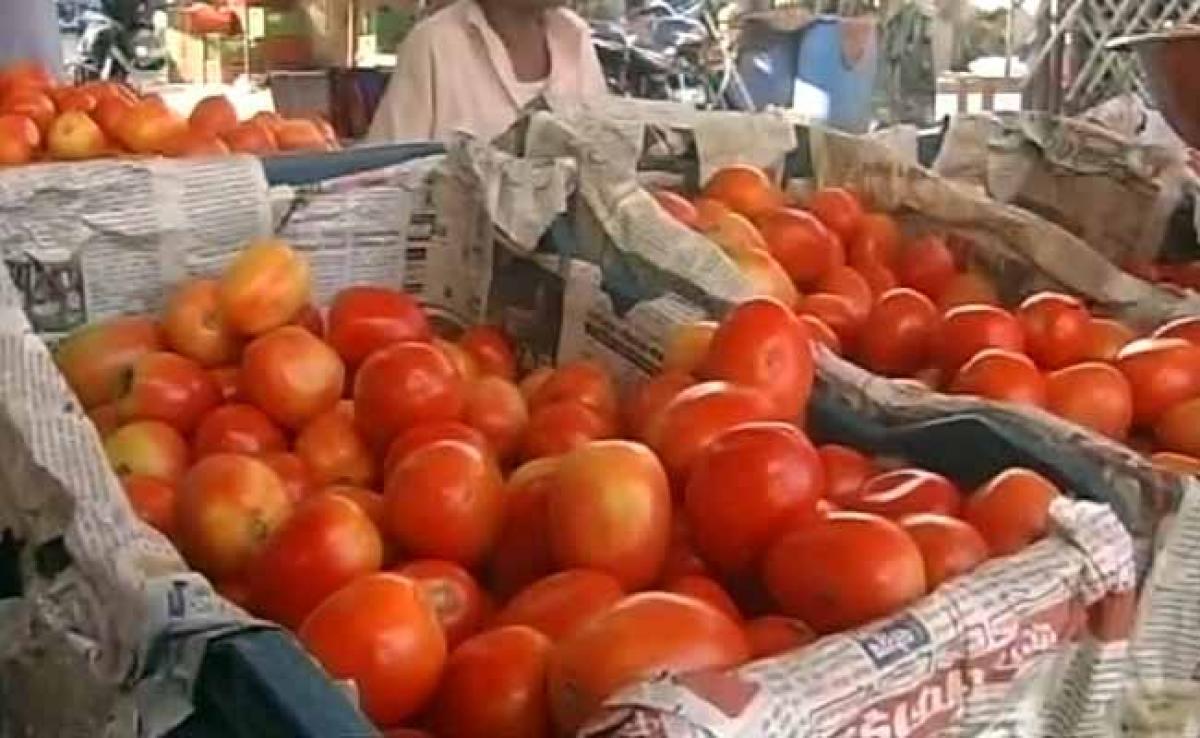 Potatoes, tomatoes growing on same plants in Haryana