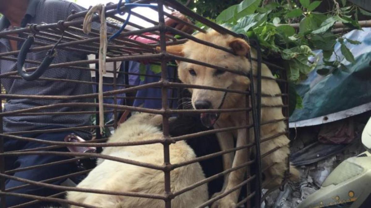Taiwan bans eating dog, cat meat