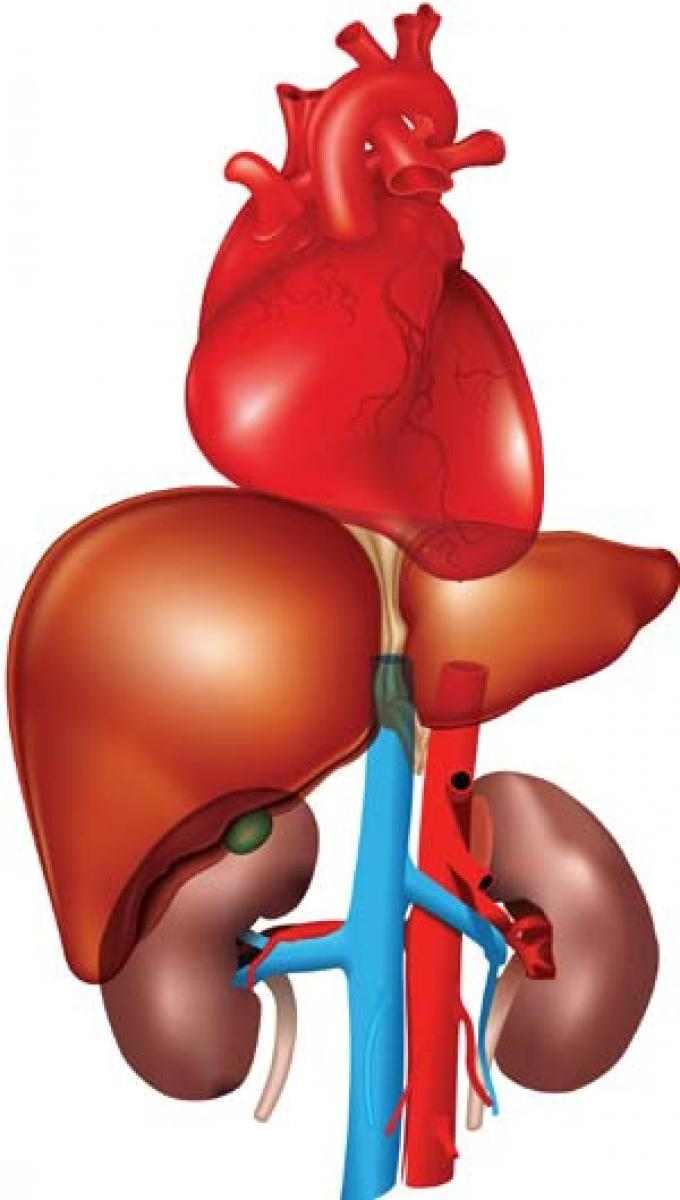 Hypertension damages kidneys and heart, say doctors