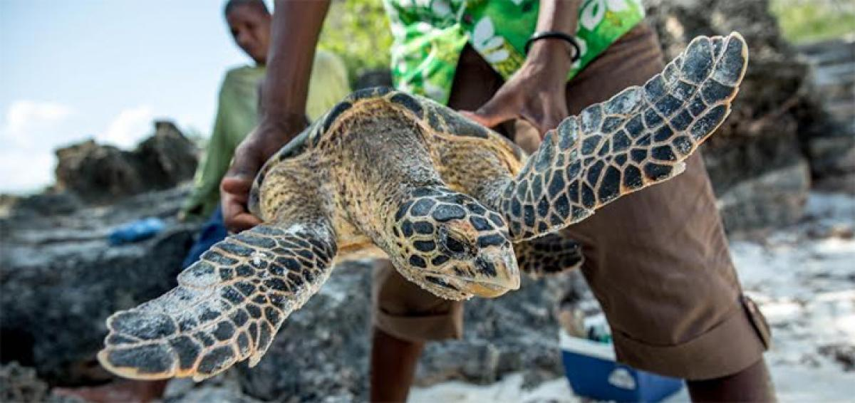 Two world firsts for wildlife lovers in Kenya