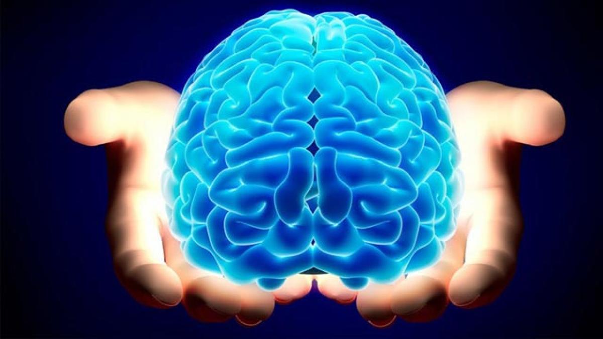 Human brain map soon to fight abnormalities